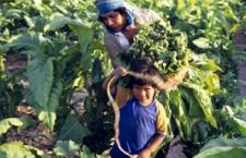 Documental Informe Huicholes y Plaguicidas