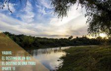 Video: Yaquis, el destino de un río, el destino de una tribu