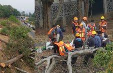 Crimen ambiental en el Parque Nacional El Tepozteco | Raúl Benet en Aristegui Noticias