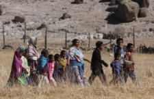 Impune, el robo de ganado y agresiones a comunidades rarámuri