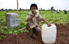 Un niño bebe un poco de agua antes de continuar con su trabajo. Culiacan, Sinaloa. 2008.