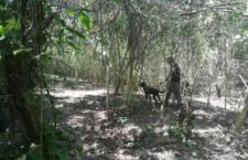 Hallan restos humanos en Norte de Veracruz; familias exigen identificarlos