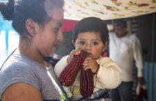 BAJO LA LUPA | ¿Viva el maíz?, por Gustavo Esteva