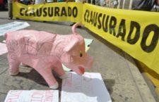 Yucatán: Denuncian trampa de empresa porcícola contra jueza que detuvo su funcionamiento