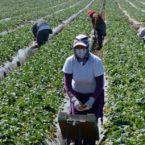 OIT advierte crisis de pobreza de trabajadores migrantes por COVID-19