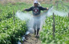 TANHUATO, MICHOACÁN, 29AGOSTO2017.- Se calcula que en el estado, hay al menos 100 mil jornaleros provenientes del Estado de México, Jalisco, Puebla, Chiapas, que trabajan y viven en situaciones precarias, ya que la falta de protección para realizar su trabajo hace que mucho de ellos sufran enfermedades que tenga que ver con los pesticidas.  FOTO: JUAN JOSÉ ESTRADA SERAFÍN /CUARTOSCURO.COM