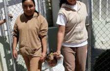 PGR: disculpa obligada: ¿justicia por muestreo?   Magdalena Gómez en La Jornada