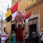 Llaman a respetar resultados de autoconsulta sobre las mega granjas de cerdos en Yucatán