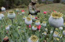 BAJO LA LUPA | Política de control de drogas y Derechos Humanos; dos sistemas, una paradoja, por Rebeca Nader