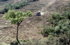 BAJO LA LUPA | El medio ambiente: víctima silenciosa de los conflictos armados, por Comité Internacional De la Cruz Roja