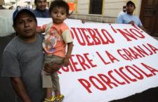 Comunidades en Península de Yucatán denuncian a granjas industriales porcícolas