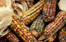 Piden personas defensoras del ambiente rectificar fallo que beneficia a Monsanto